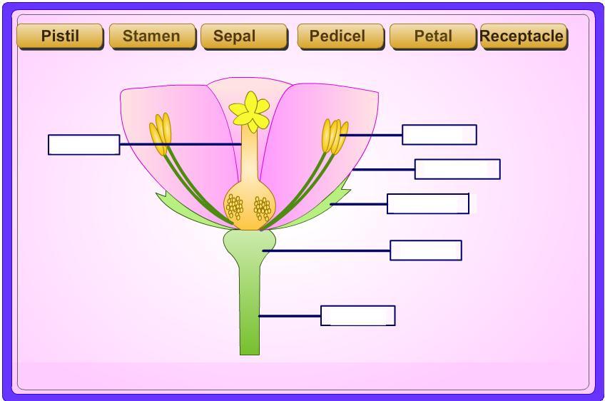20150224085623-flower-parts-.jpg