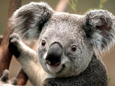20181217102609-animales-mas-pacificos-del-mundo.jpg